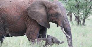 Mon voyage en solitaire en Tanzanie