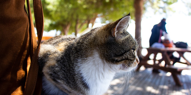 Comment voyager avec son chat à l'étranger ?